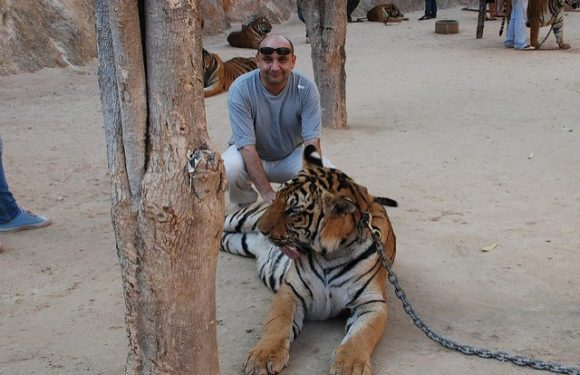 Think twice about wild animal tourism, How to enjoy wildlife without harming it